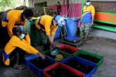 Teknologi Urai Sampah Menggunakan Larva Mulai Diterapkan Di Surabaya