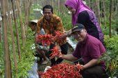 DKPP Surabaya Berdayakan Kelompok Tani, Wujudkan Ketahanan Pangan