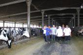 217 Ribu Ton Susu Jatim Masih Impor. Gubernur Khofifah Dorong Perluasan Ternak Sapi Perah