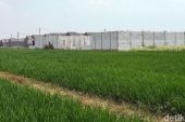 Distan Jatim Pertahankan Surplus Padi Per-tahun, Meski Lahan Sawah Menyusut