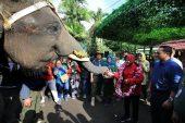 Kebun Binatang Surabaya Kini Dilengkapi Joging Track Dan Media Centre