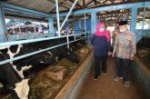 Industri Susu Jatim Survive Di Tengah Pandemi. Gubernur Dorong Jadi Industri Nasional.